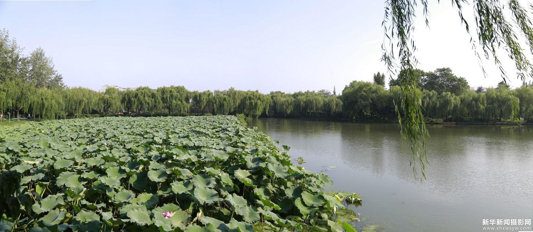 荷花池全景图6